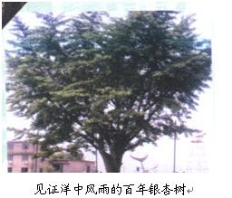 上海市洋泾中学上海市洋泾中学校园介绍