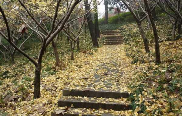 浙江省诸暨中学浙江省诸暨中学校园相片