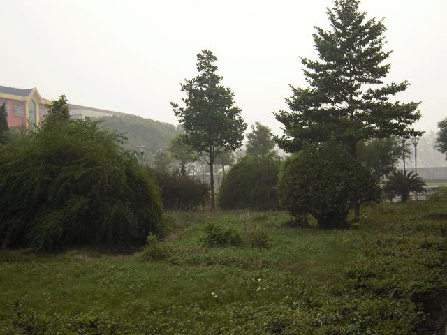 江陵县马家寨初级中学校园风景|江陵县马家寨初级