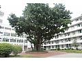 仙游县游洋中学仙游县游洋中学校园介绍
