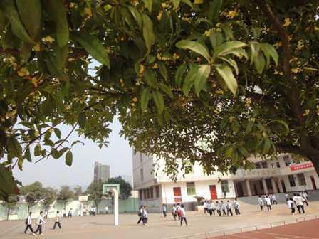 三明市第四中学三明市第四中学校园图片