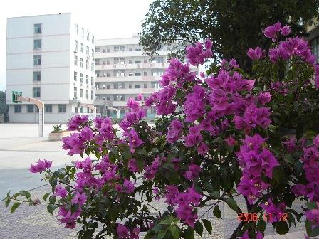 三明市第四中学三明市第四中学校园介绍