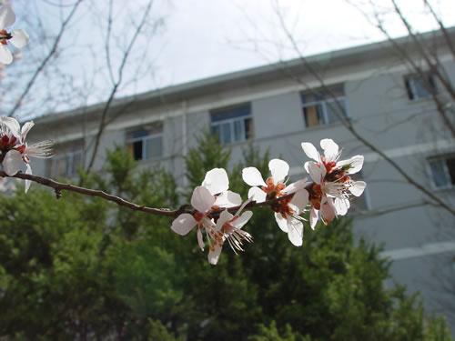 宁夏大学5c29fdd94bd9125b