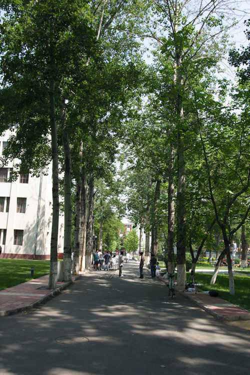 中国传媒大学年轻的白杨