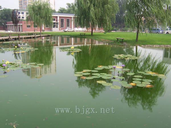 对外经济贸易大学荷花池