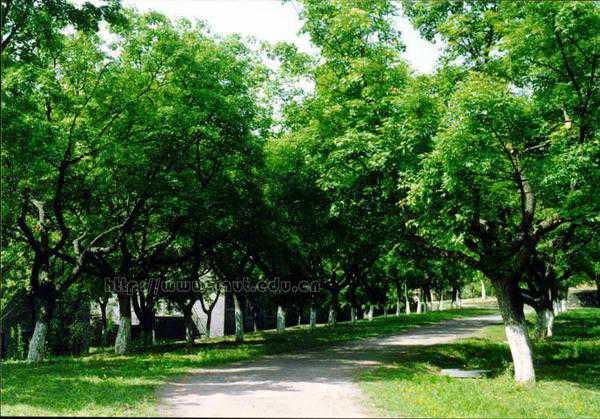 陕西理工学院校园绿荫