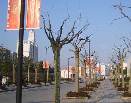上海中医药大学1