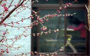 北京大学http://school.edu63.com/uploadfile/2009042914482736_thumb.jpg