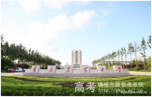 青岛农业大学  校园一角