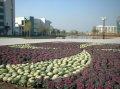 南京医科大学南京医科大学广场