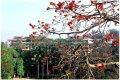 华南农业大学华南农业大学景1